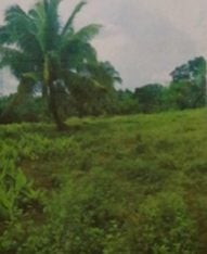 Brgy. San Gregorio, Laurel, Batangas Land